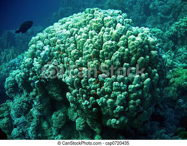 Underwater landscape - csp0720435