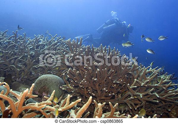 Underwater landscape - csp0863865