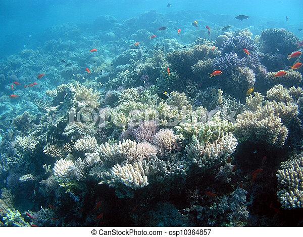 Underwater landscape - csp10364857