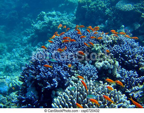Underwater landscape - csp0720432