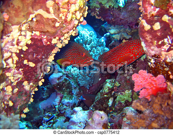 Underwater landscape - csp0775412