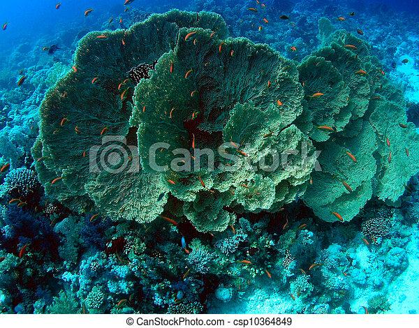 Underwater landscape - csp10364849