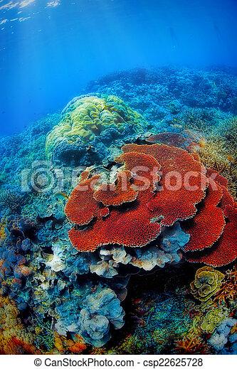 Underwater landscape - csp22625728
