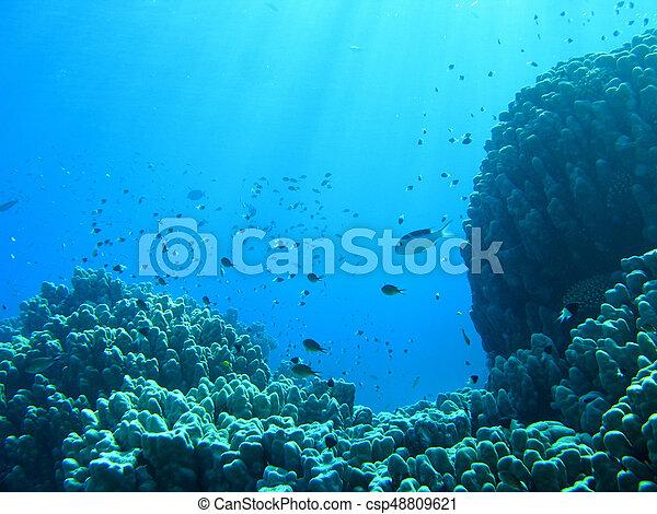 Underwater landscape - csp48809621