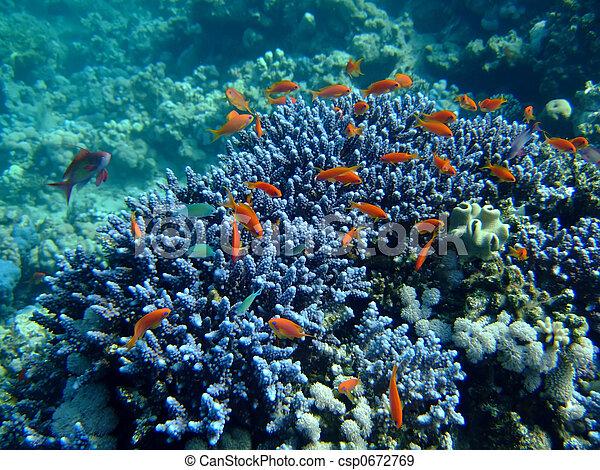 underwater landscape - csp0672769