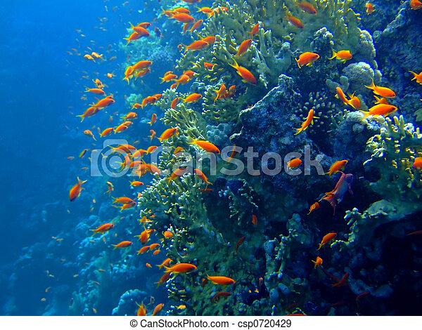 Underwater landscape - csp0720429