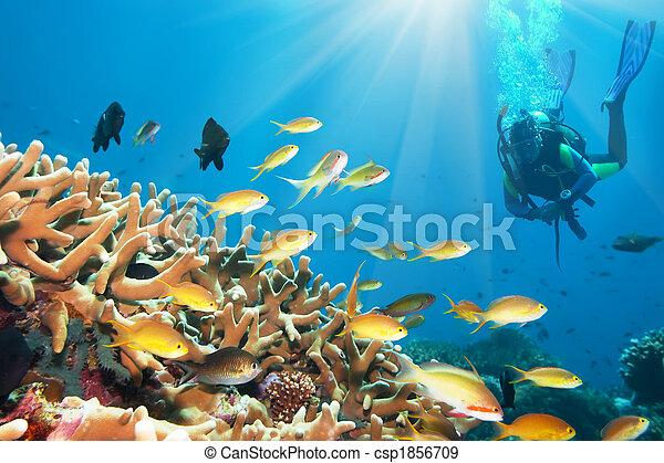 Underwater landscape - csp1856709