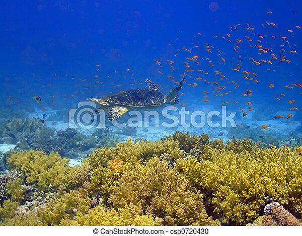 Underwater landscape - csp0720430