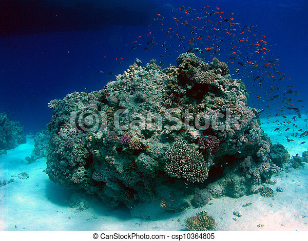 Underwater landscape - csp10364805
