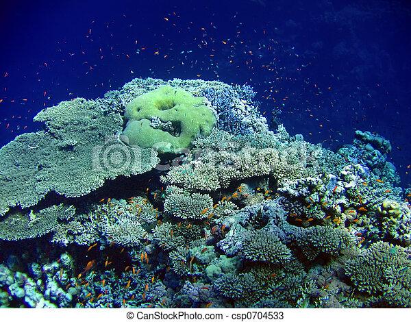 Underwater landscape - csp0704533
