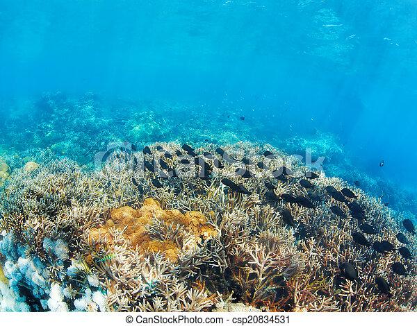 Underwater landscape - csp20834531
