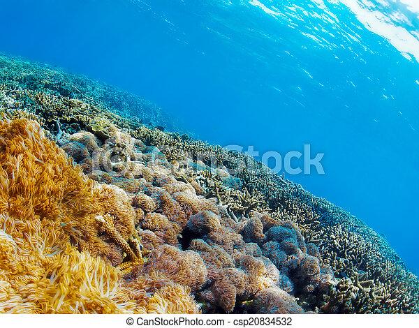 Underwater landscape - csp20834532