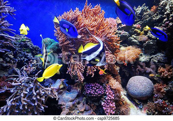 underwater life - csp9725685