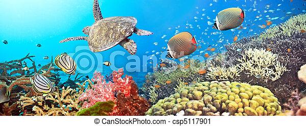 Underwater panorama - csp5117901