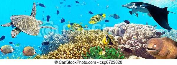 Underwater panorama - csp6723020