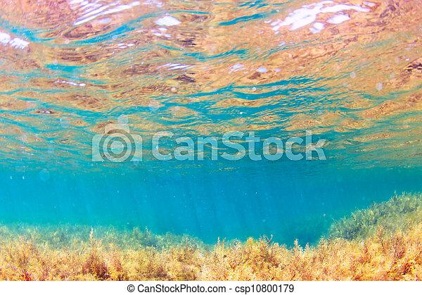 Underwater - csp10800179