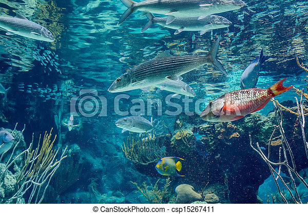 underwater - csp15267411