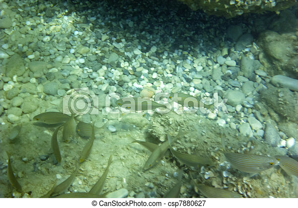 Underwater - csp7880627