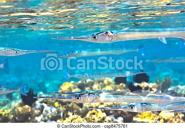 Underwater - csp8475761