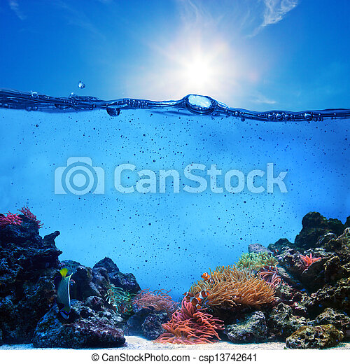 Underwater scene. Coral reef, blue sunny sky and clean water - csp13742641