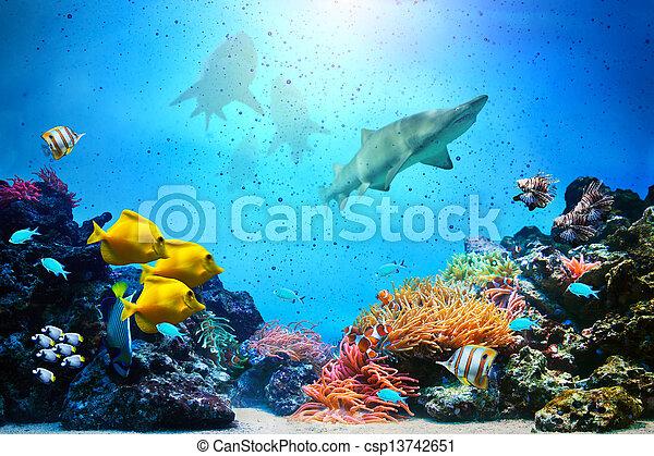 Underwater scene. Coral reef, fish groups, sharks in clear ocean water - csp13742651
