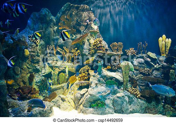 underwater scene - csp14492659