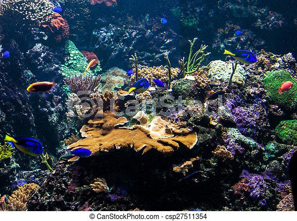 Underwater scene - csp27511354