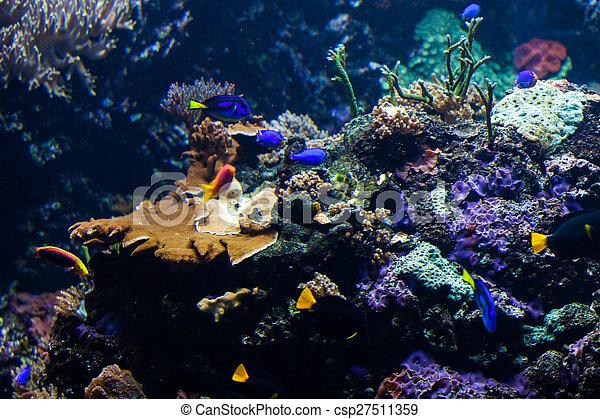 Underwater scene - csp27511359