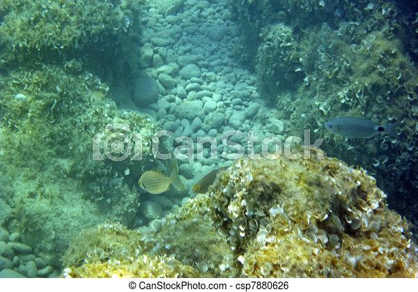 Underwater - csp7880626