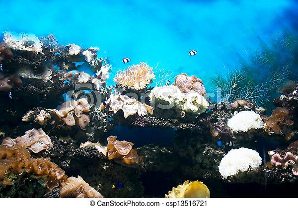 Underwater - csp13516721