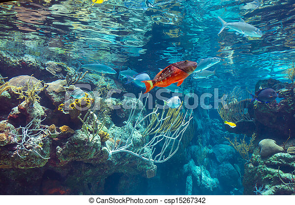 underwater - csp15267342