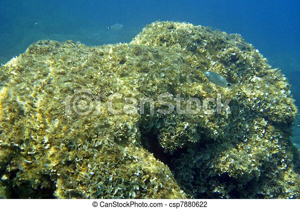 Underwater - csp7880622