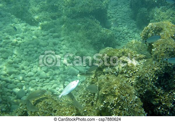 Underwater - csp7880624