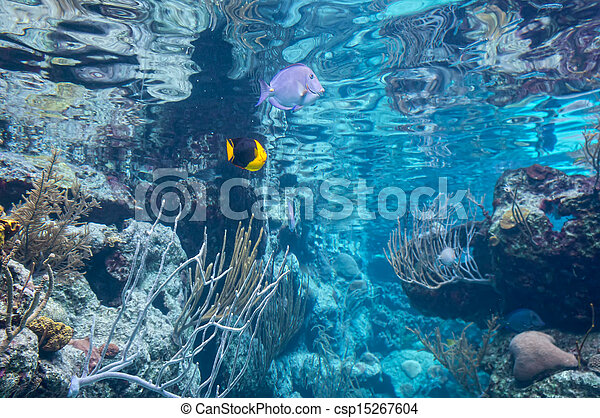 underwater - csp15267604
