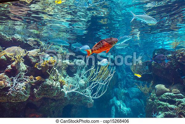 underwater - csp15268406