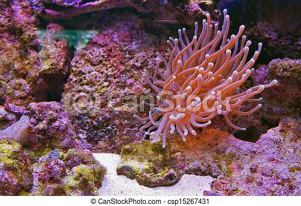 underwater - csp15267431