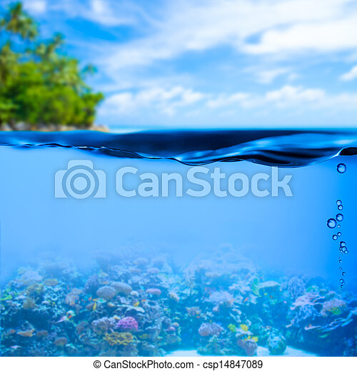 underwater tropical sea with water surface background - csp14847089