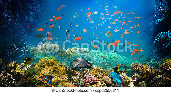 Underwater world. Coral fishes of Red sea. - csp82556311