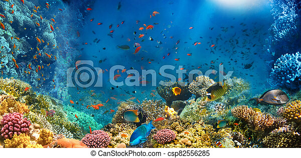 Underwater world. Coral fishes of Red sea. - csp82556285