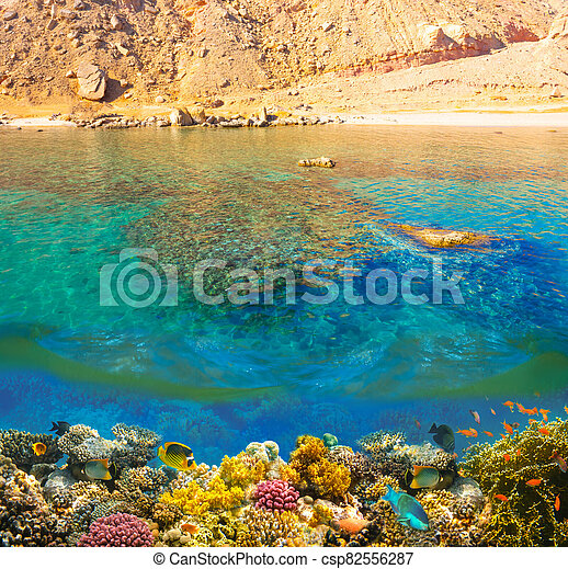 Underwater world. Coral fishes of Red sea. - csp82556287