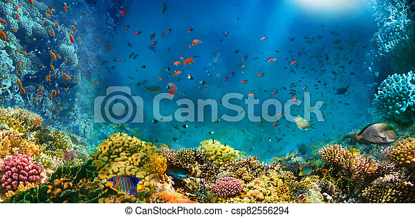 Underwater world. Coral fishes of Red sea. - csp82556294