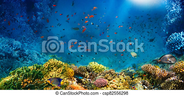 Underwater world. Coral fishes of Red sea. - csp82556298