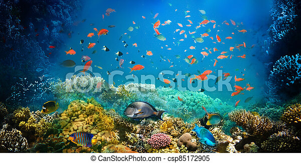 Underwater world. Coral fishes of Red sea. - csp85172905