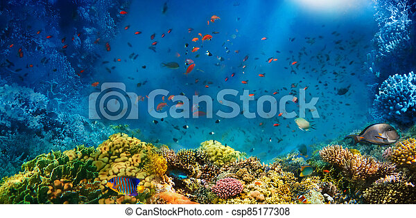 Underwater world. Coral fishes of Red sea. - csp85177308