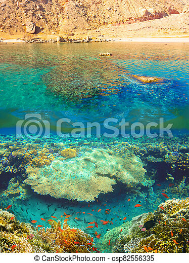 Underwater world. Coral fishes of Red sea. - csp82556335