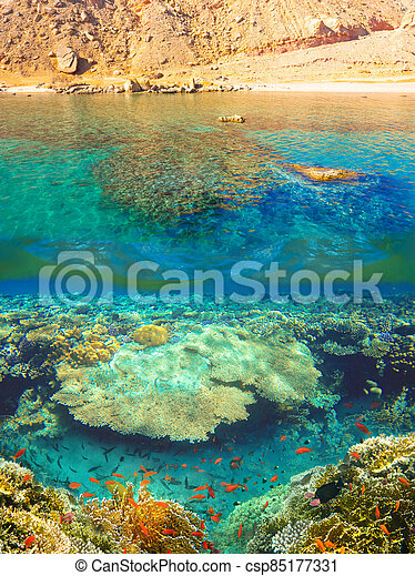 Underwater world. Coral fishes of Red sea. - csp85177331