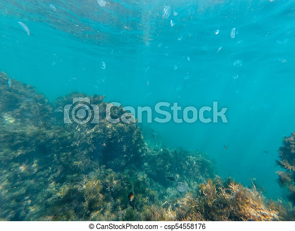 underwater world of clear blue water in depths of sea with jellyfish and fish - csp54558176
