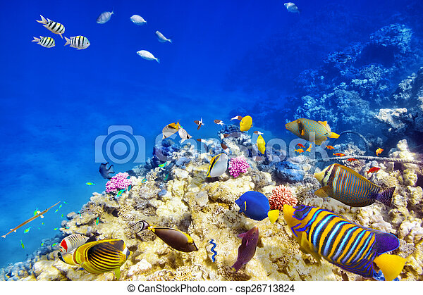 Underwater world with corals and tropical fish. - csp26713824