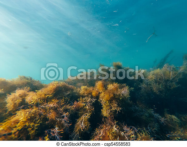 underwater world with seaweed and the clear blue water - csp54558583