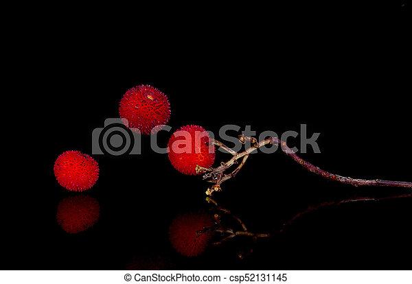 Frutas del árbol de fresa, Arbutus unedo. - csp52131145